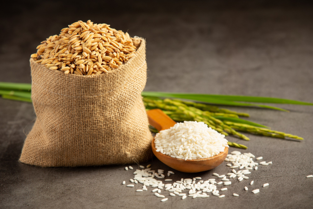 This image has an empty alt attribute; its file name is sack-rice-seed-with-white-rice-small-wooden-spoon-rice-plant.jpg